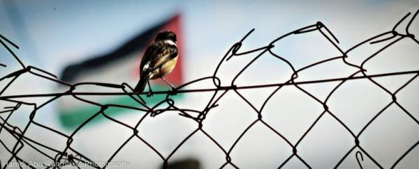 Palestijnen_longread12-768x312
