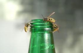 Wespen en dramaqueens